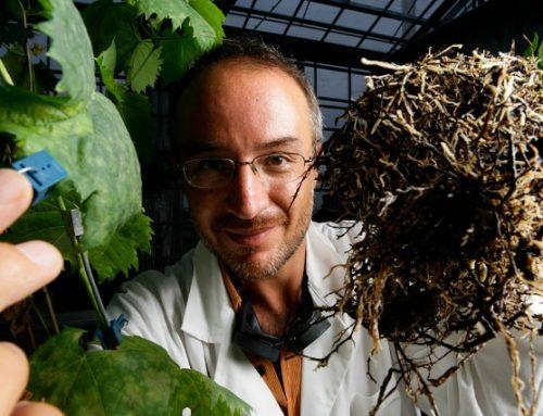 Alla radice dell'intelligenza delle piante del prof. Stefano Mancuso