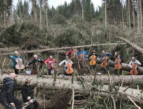 Note dal bosco degli Stradivari: Suono per la natura ferita e gli alberi morti